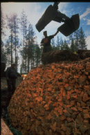 Finsk tjæremile stabling